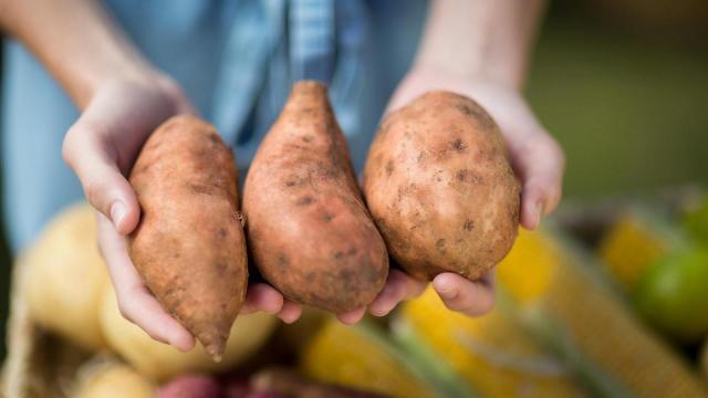 Discover Wilson Sweet Potatoes
